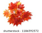 autumn maple leaves | Shutterstock . vector #1186592572