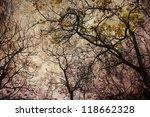 Autumn Grunge  Bare Trees On A...