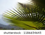 background mountains and palm... | Shutterstock . vector #1186654645