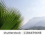 background mountains and palm... | Shutterstock . vector #1186654648
