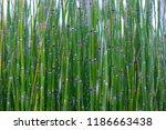 lush green background of plants | Shutterstock . vector #1186663438