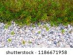 garden with trees  plants ... | Shutterstock . vector #1186671958