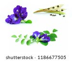 set of butterfly pea with leaf | Shutterstock . vector #1186677505