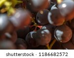 bunches of ripe grapes | Shutterstock . vector #1186682572