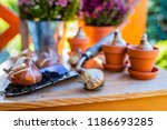 bulbs of flowers ready for... | Shutterstock . vector #1186693285