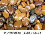 modern style close up wet round ... | Shutterstock . vector #1186743115