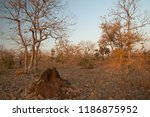 termite mound and dry deciduous ... | Shutterstock . vector #1186875952
