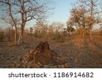 termite mound and dry deciduous ... | Shutterstock . vector #1186914682