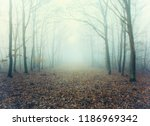 Mystic Foggy Forest Alley With...