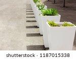 plants in white rectangular... | Shutterstock . vector #1187015338