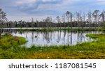 reflections of dead tree trunks ... | Shutterstock . vector #1187081545