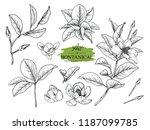 sketch floral botany set.... | Shutterstock .eps vector #1187099785