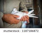 Pigeons Birds Flying Or...