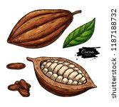 cocoa vector superfood drawing... | Shutterstock .eps vector #1187188732