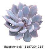 succulent plant blossom... | Shutterstock . vector #1187204218