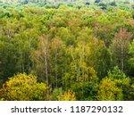 above view of wet birch grove... | Shutterstock . vector #1187290132