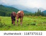 grazing horse at high land...   Shutterstock . vector #1187373112