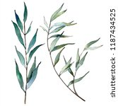 watercolor green willow... | Shutterstock . vector #1187434525