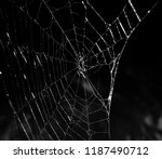 Close up of a sliver spiderweb...
