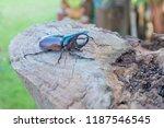 a brown male rhinoceros  rhino... | Shutterstock . vector #1187546545