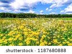 summer meadow flowers scene.... | Shutterstock . vector #1187680888