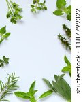 fresh spicy and medicinal herbs ... | Shutterstock . vector #1187799322