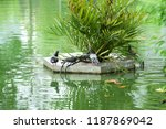 many species of birds are at... | Shutterstock . vector #1187869042