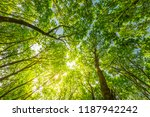 beautiful nature environment ... | Shutterstock . vector #1187942242