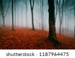 mysterious woods landscape with ... | Shutterstock . vector #1187964475