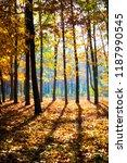 colors of golden autumn | Shutterstock . vector #1187990545