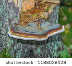 close up of brown wood  stem... | Shutterstock . vector #1188026128