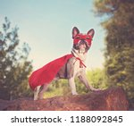 cute french bulldog in a super... | Shutterstock . vector #1188092845