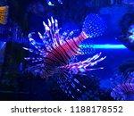 zebrafish   firefish  tastyfish ... | Shutterstock . vector #1188178552