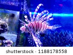 zebrafish   firefish  tastyfish ... | Shutterstock . vector #1188178558
