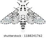 night moth zeuzera pyrina   Shutterstock .eps vector #1188241762