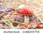 Poisonous Mushrooms In The...