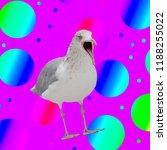 funny bird pigeon... | Shutterstock . vector #1188255022
