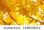 autumn leaves on the sun. fall... | Shutterstock . vector #1188328312