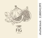 figs  fruit and piece of fig.... | Shutterstock .eps vector #1188341395
