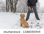 train dog with yelllow stick at ... | Shutterstock . vector #1188350545