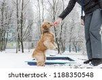 feeding and training of dog... | Shutterstock . vector #1188350548
