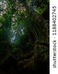 curtis falls in mount tamborine | Shutterstock . vector #1188402745