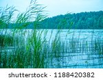 lake reed. the lake is... | Shutterstock . vector #1188420382