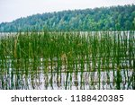lake reed. the lake is... | Shutterstock . vector #1188420385
