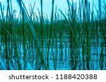 lake reed. the lake is... | Shutterstock . vector #1188420388