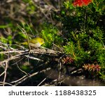 tiny  little  silvereye or wax... | Shutterstock . vector #1188438325