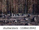 Burned Zone With Black Stumps...