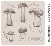 edible mushrooms   hand drawn... | Shutterstock .eps vector #1188690952