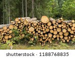stack of felled trees in the... | Shutterstock . vector #1188768835