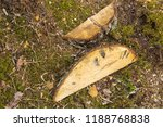 stack of felled trees in the... | Shutterstock . vector #1188768838
